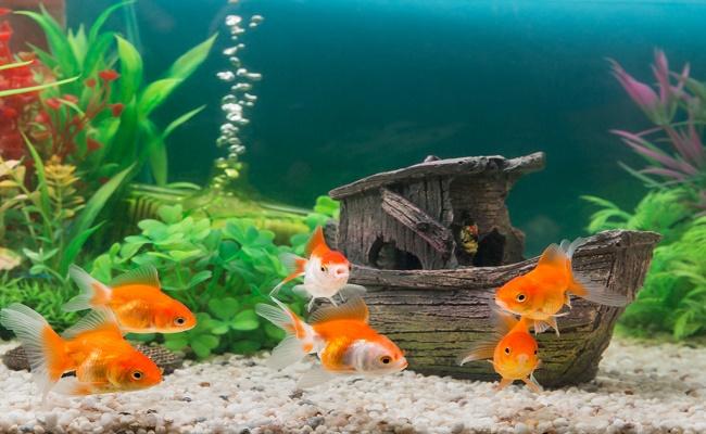 Decoración de su acuario