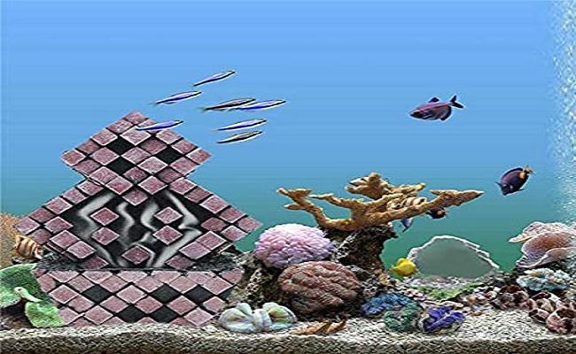 equipo y decoración del acuario 0