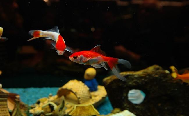 que hace el filtro por tu acuario. 0