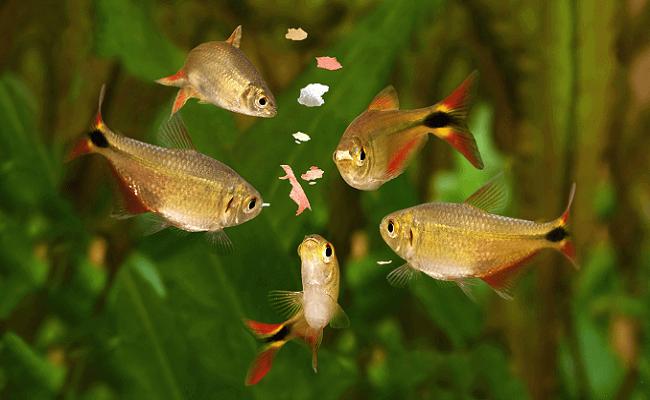 Errores en el acuario