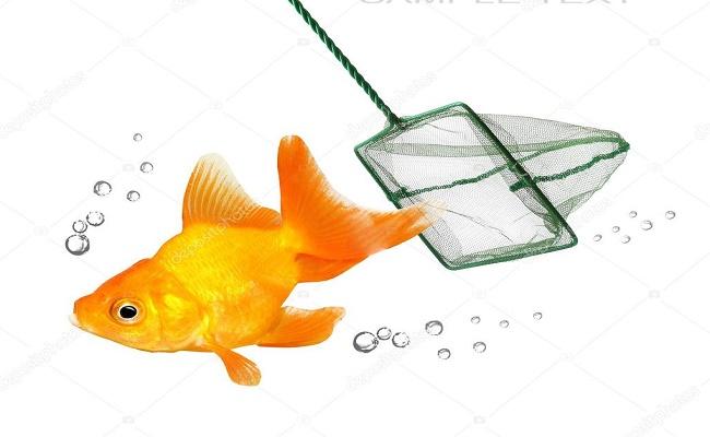 Redes de peces 0