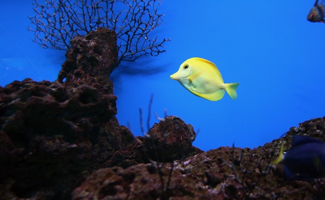 acuario tropical de agua dulce