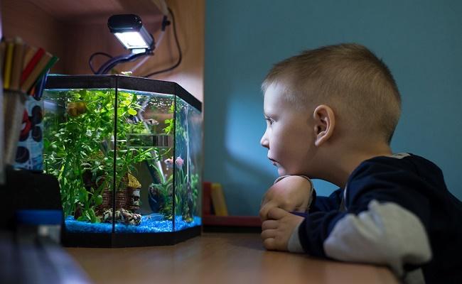 peces para niños