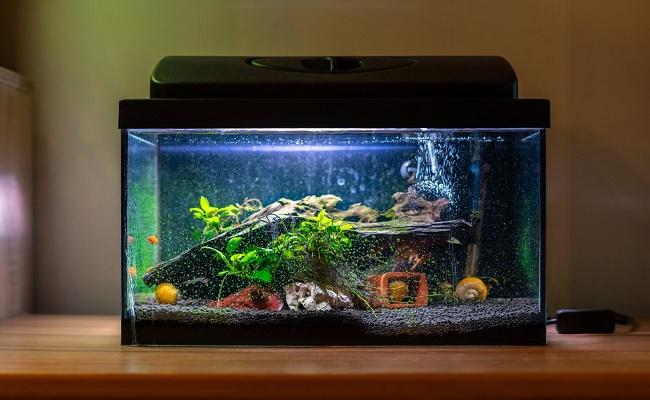 química del agua en su acuario. 0