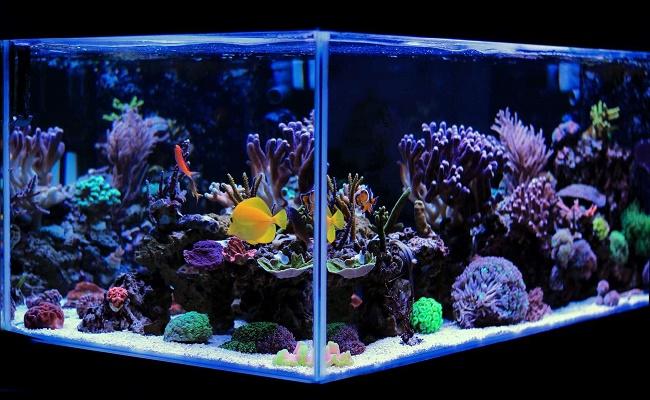química del agua en su acuario