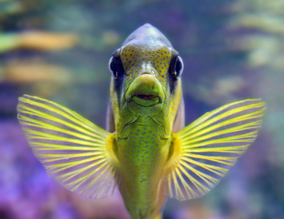 Pueden los peces ahogarse. 0.