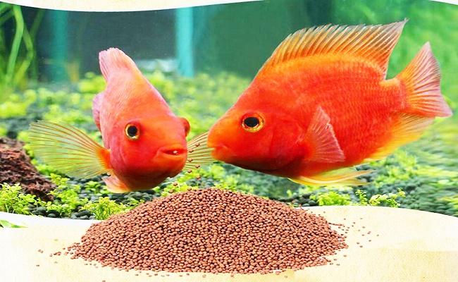 Qué comen los peces. 0