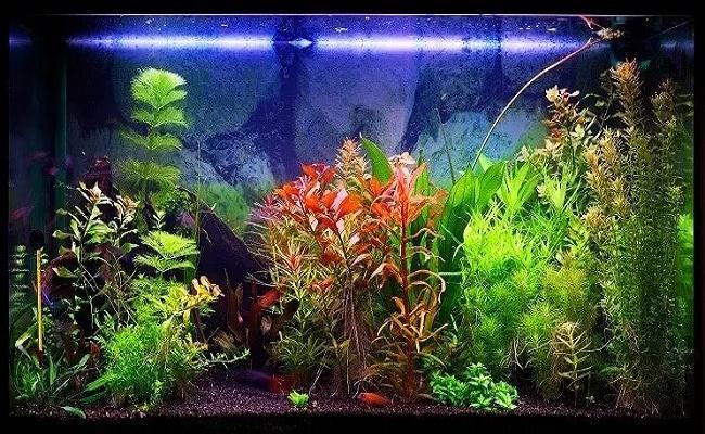 Acuario de peces de 113 litros