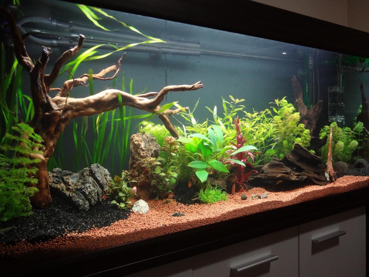 acuario plantado 0