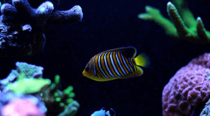cria de peces
