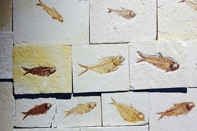 evolucion de los peces