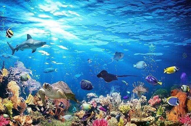evolución de los peces