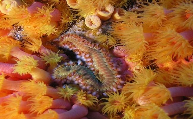 gusanos de cerdas en su acuario