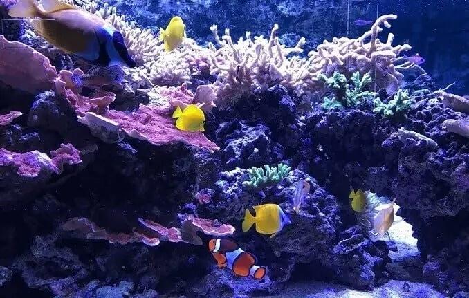 tamaño de acuario de peces 1-