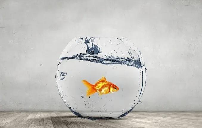 tamaño de acuario de peces