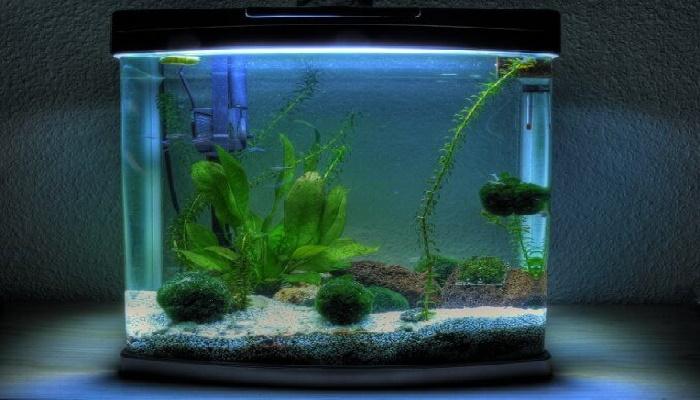 acuarios de peces de 12 litros 0