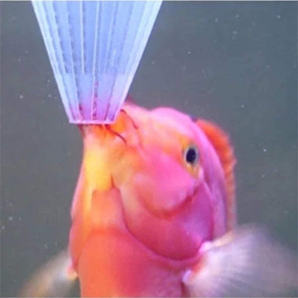 pez molly